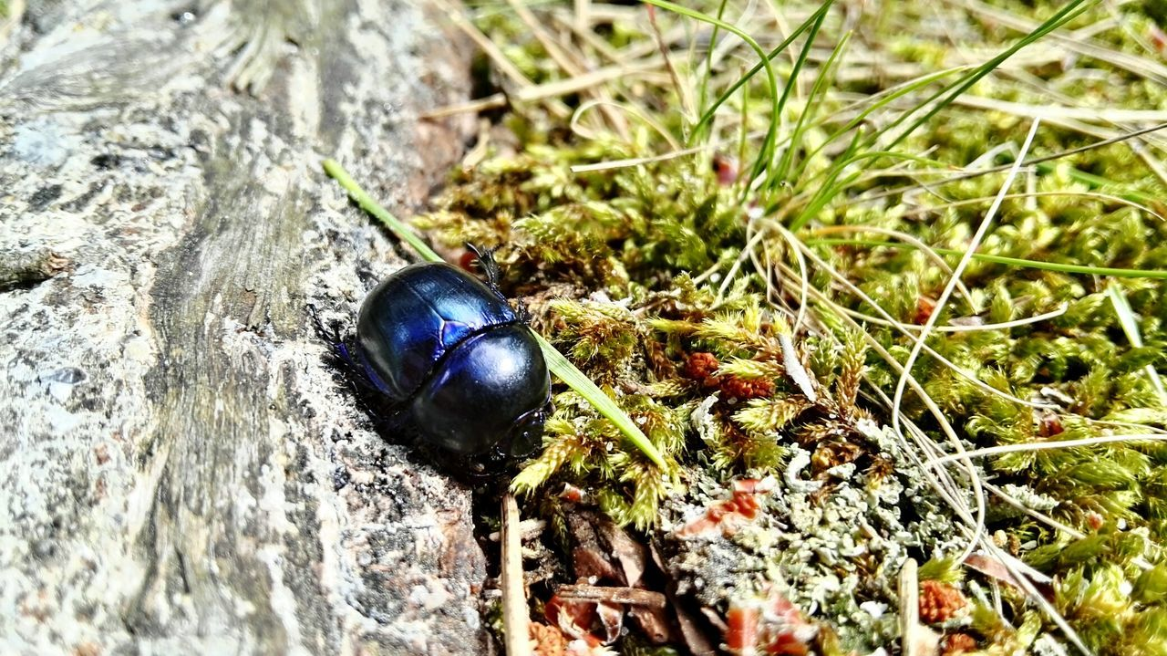 one animal, animal themes, animals in the wild, insect, no people, high angle view, outdoors, day, close-up, nature