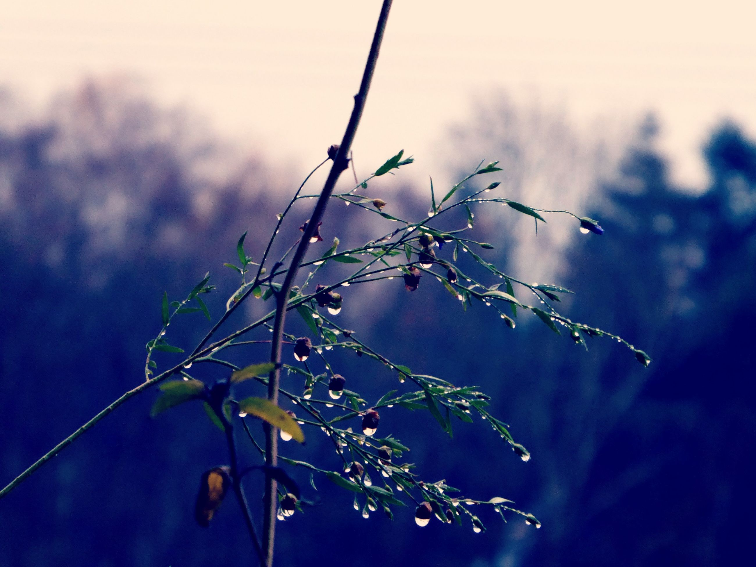 nature, focus on foreground, plant, growth, tree, no people, outdoors, beauty in nature, branch, day, close-up, fragility, sky
