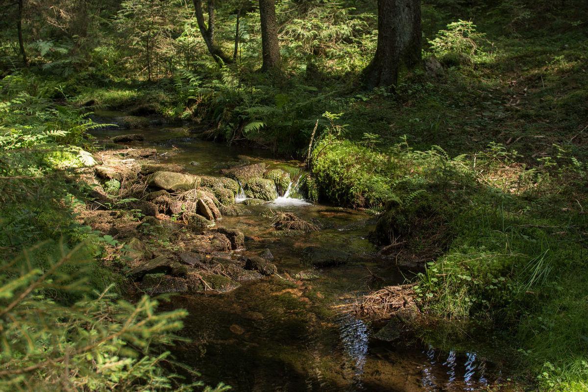 Saar-Hunsrück-Steig, Traumschleife Felsenweg Forest Green Green Color Hiking Hikingadventures Nature Outdoors River Saar-Hunsrück-Steig Traumschleife Wald Wanderlust Wandern Water
