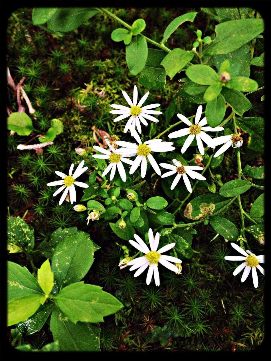 Flowers White Temple Japanese Garden
