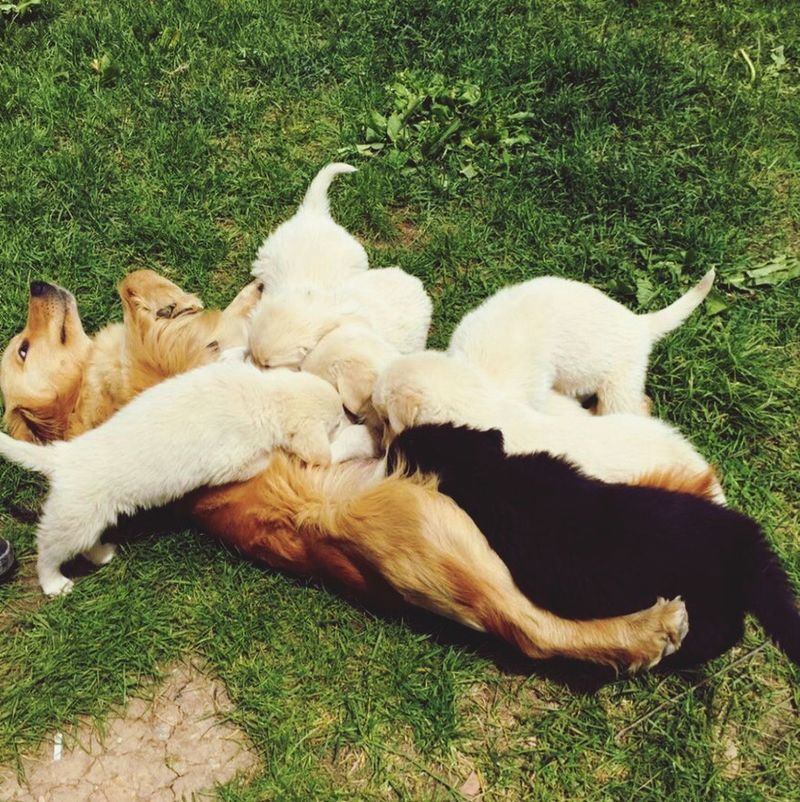 😍🐾🐾 Dog Togetherness Nature Animal Themes Mother Amazinganimals Lying Down Grass Outdoors Relaxation Beauty In Nature Magnificent View EyeEm Pure Love It