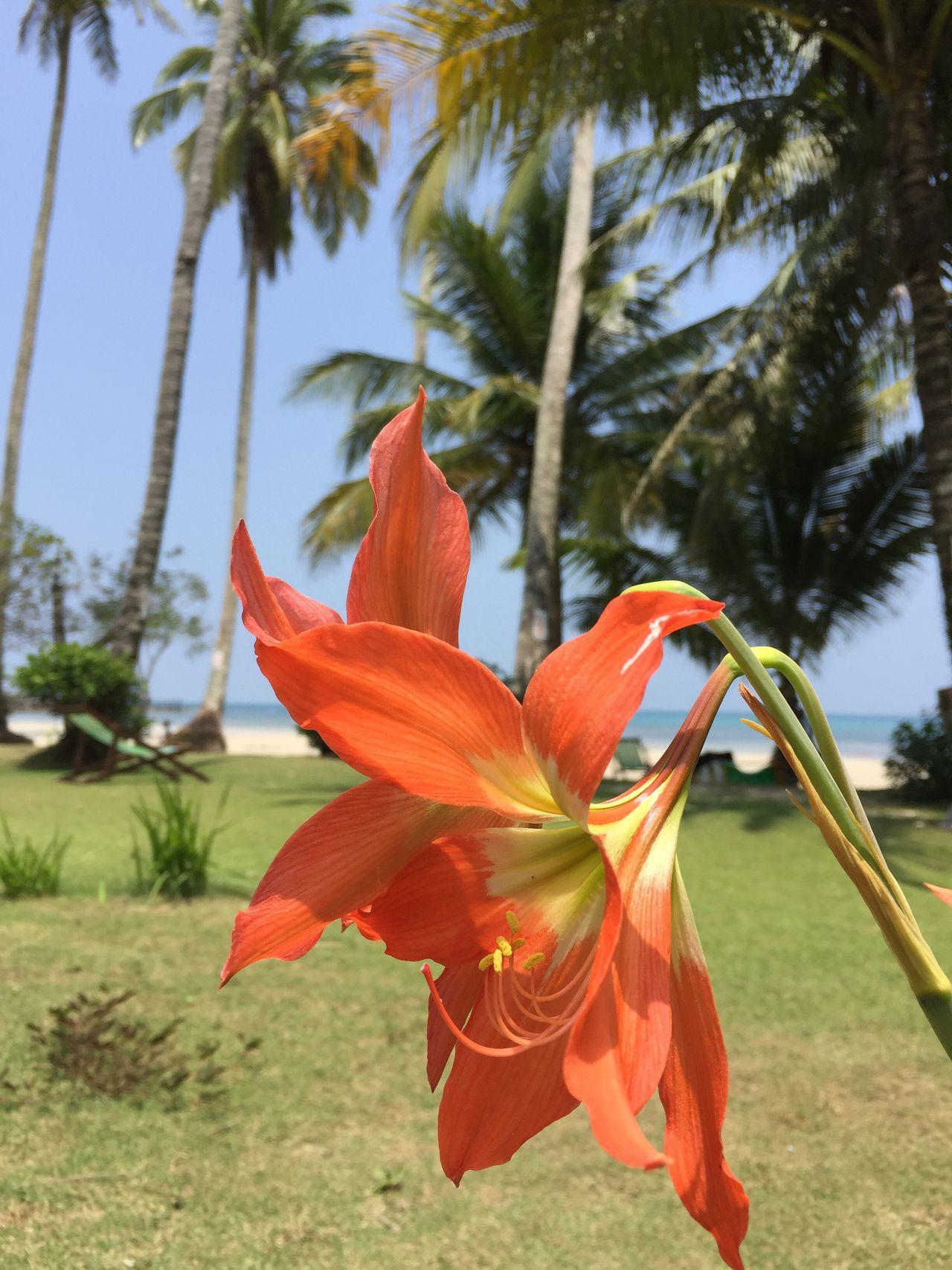 Flowers Nature Koh Kood Thailand