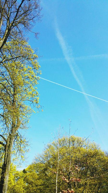 Sky Blue Sky Spring Park From Where I Stand