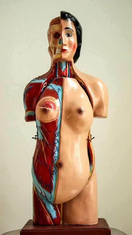 Old Things for Medical Education. Human Body for Study