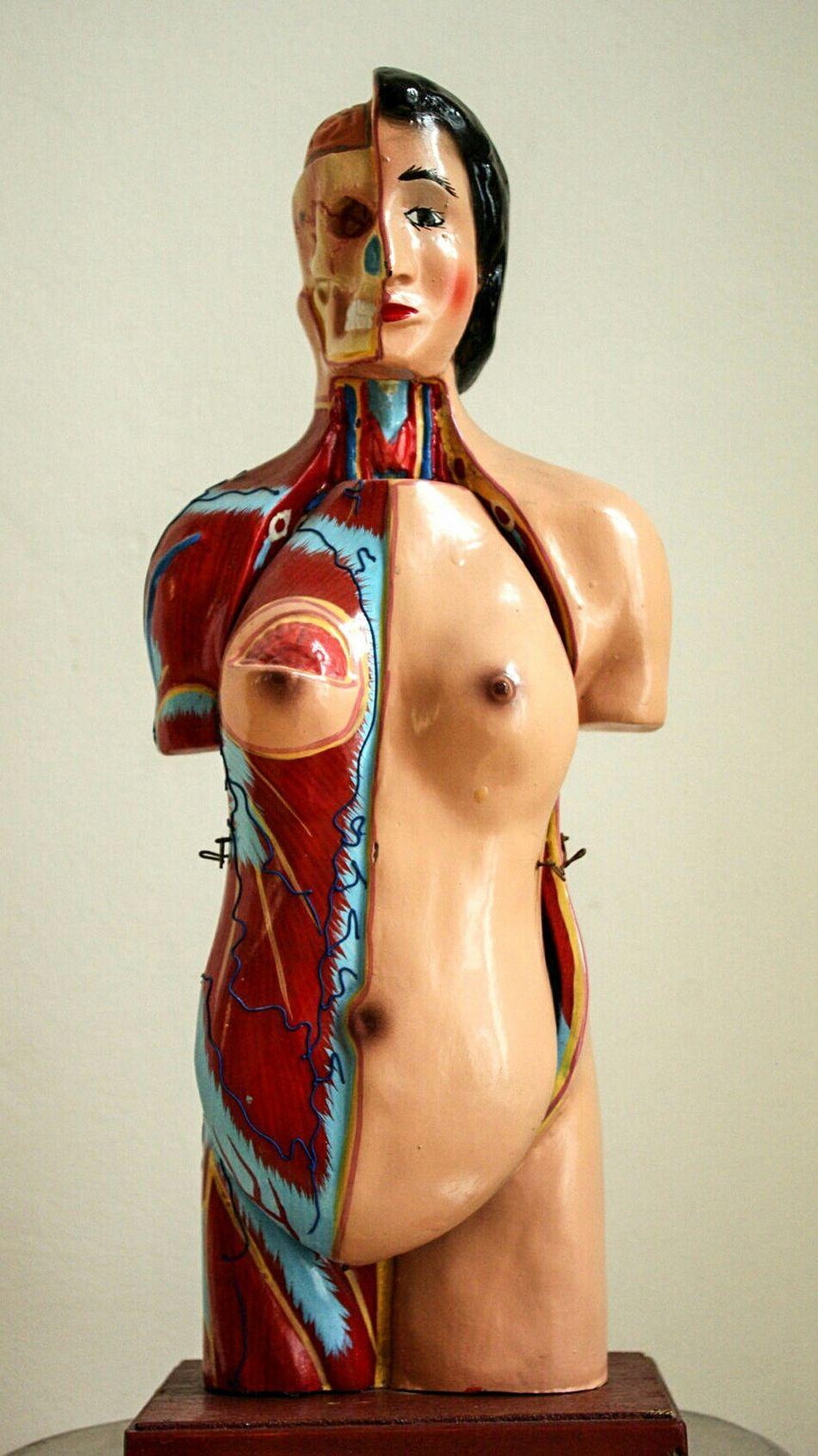 Beautiful stock photos of nude, Anatomy, Biology, Breast, Close-Up
