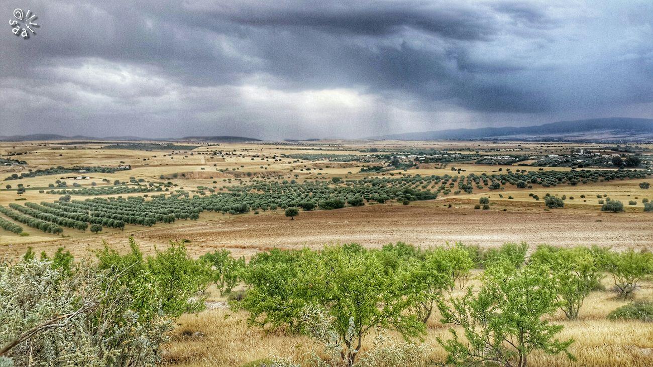 Hanging Out Hello World Nature Landscape Best Shots Eyeem Tunisia Nature ElAroussa Siliana Tunisia