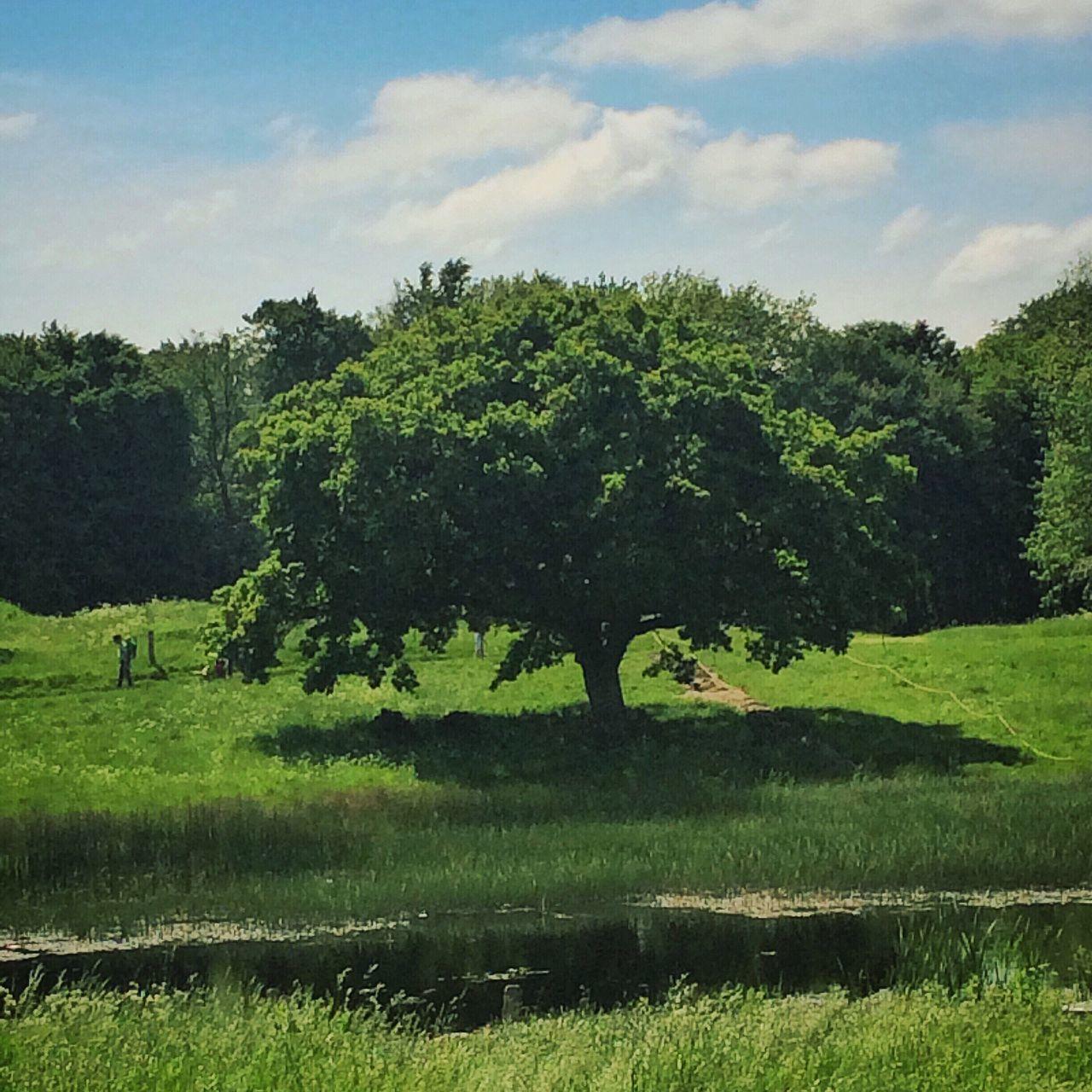 Summer In Denmark Denmark Lejre Trees TreePorn Tree_collection  Sky And Trees Himmel Skyer Exploring New Ground