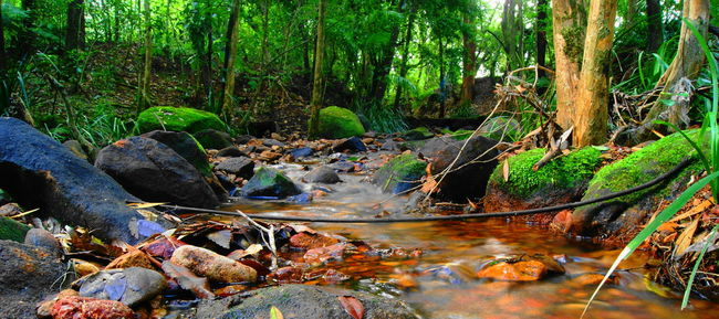 Forest Water Stream Tree Tranquil Scene Non-urban Scene Tranquility WoodLand Scenics Nature Tree Trunk Tourism Rock - Object Flowing Fallen Tree Beauty In Nature Idyllic Travel Destinations Green Color Vacations Australia Rock Flowing Water Abundance Tranquility
