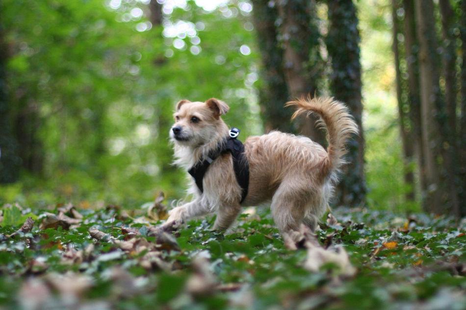 Dog Dog Portrait Dogs Draußen Forest Green Hund Hund Im Efeu Hund Im Wald Hunde Hundeportrait Nature Non-urban Scene Outdoors Pets Portrait WoodLand