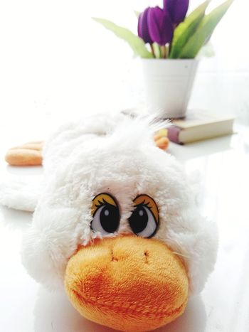 Where is my husband?😨 U see?😔😂😂 *Live with fun * 🌷 Flowers 🌹 & DuckfaceChallenge Duck Face Friday