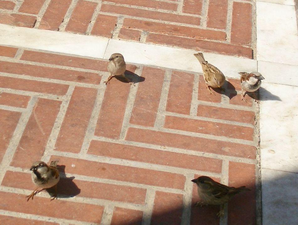 Beautiful stock photos of floor, Animal Themes, Animals In The Wild, Bird, Day