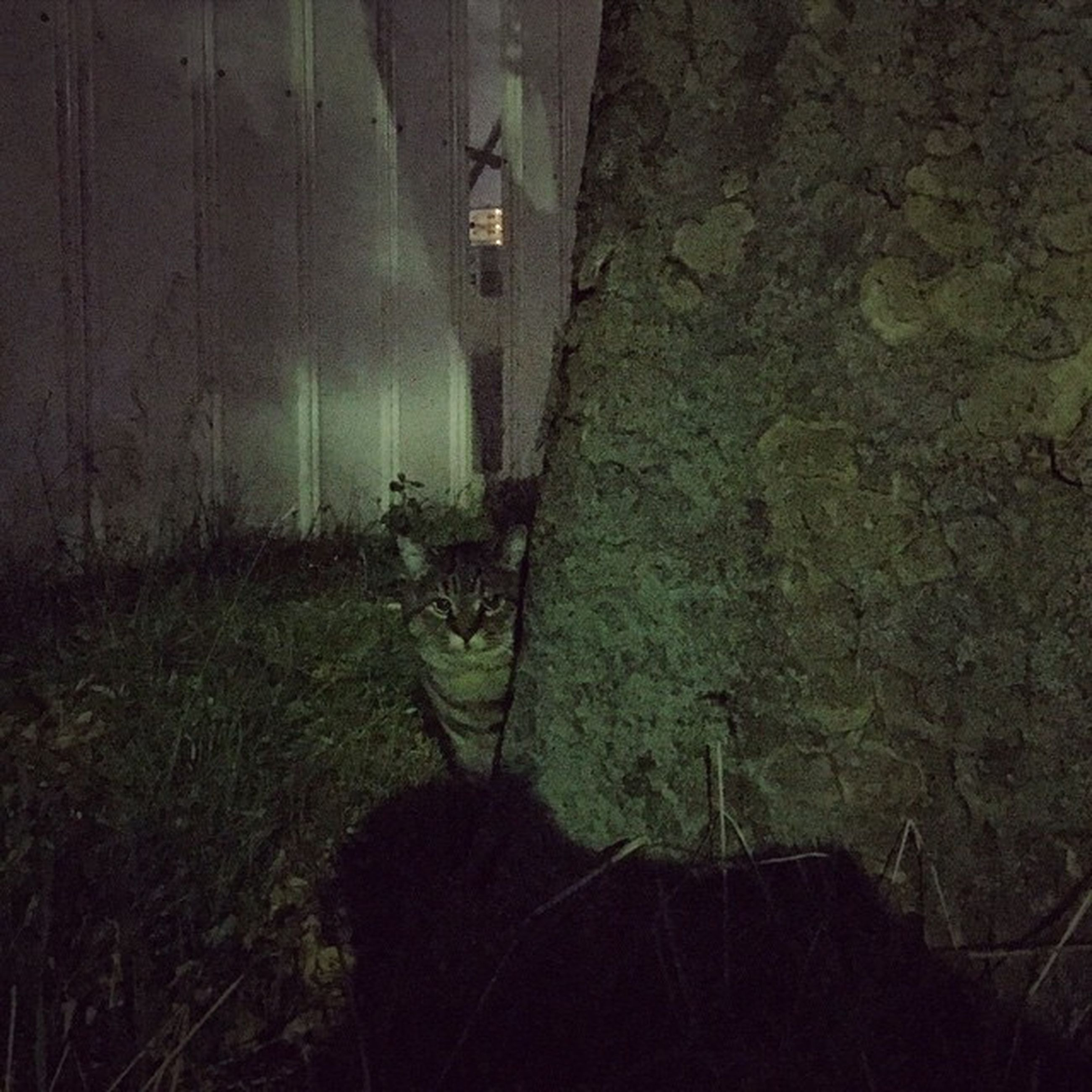 plant, wall - building feature, growth, dark, no people, built structure, shadow, sunlight, abandoned, day, outdoors, nature, grass, architecture, house, wall, branch, high angle view