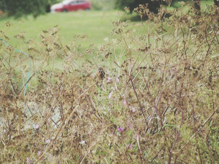 Taking Photos Nature Bird Photography Scenery