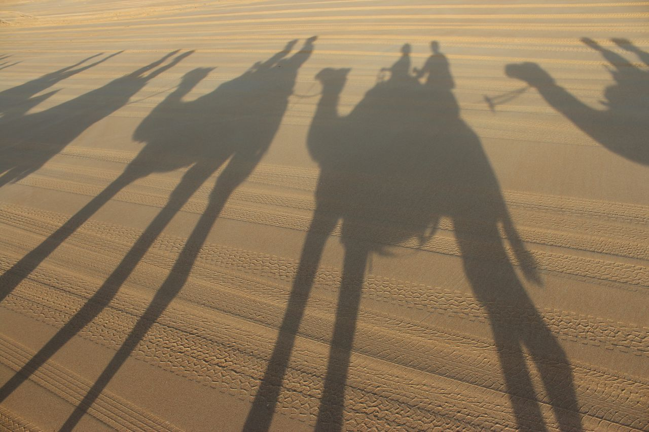 Beautiful stock photos of camel, Animal Themes, Australia, Beach, Camel