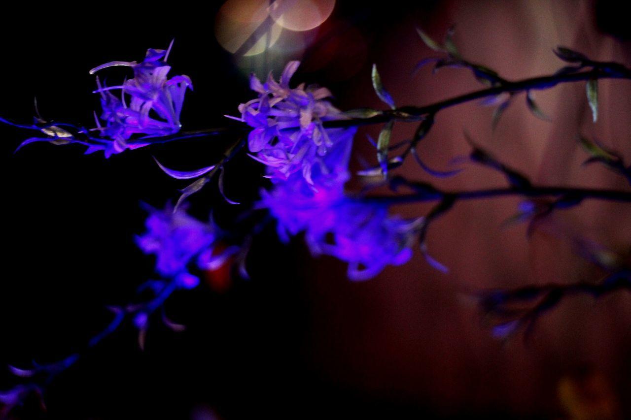 Artificial Flower Indoor Lighting Indoor Flowers Light And Darkness  Old Photo Casualphotography