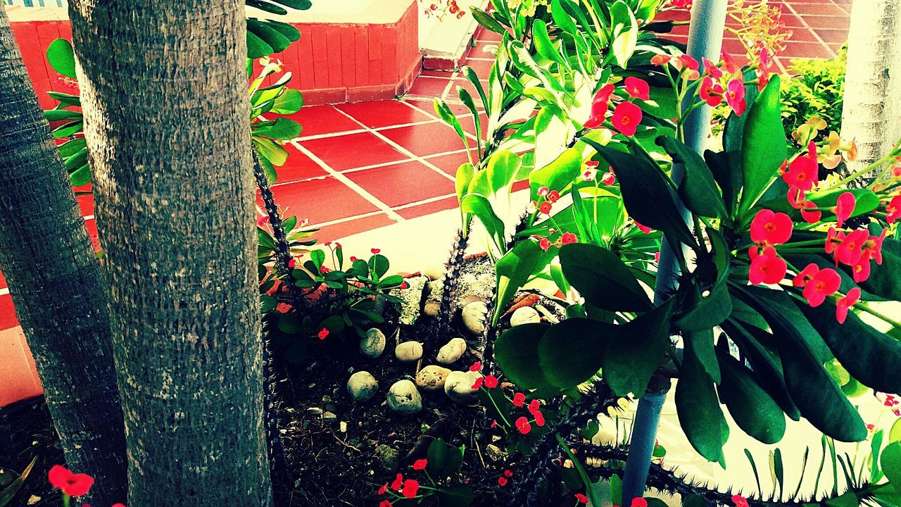 growth, plant, nature, flower, leaf, outdoors, no people, green color, beauty in nature, day, potted plant, building exterior, architecture, window box, plant nursery, tree, freshness, greenhouse