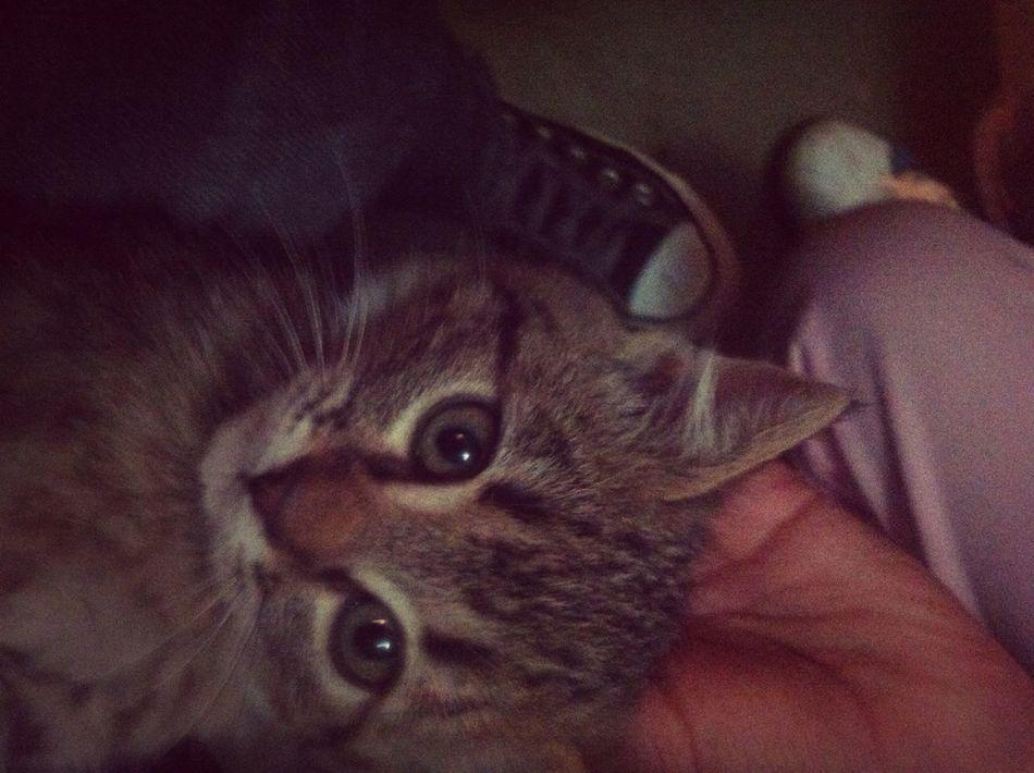 Little Cat <3