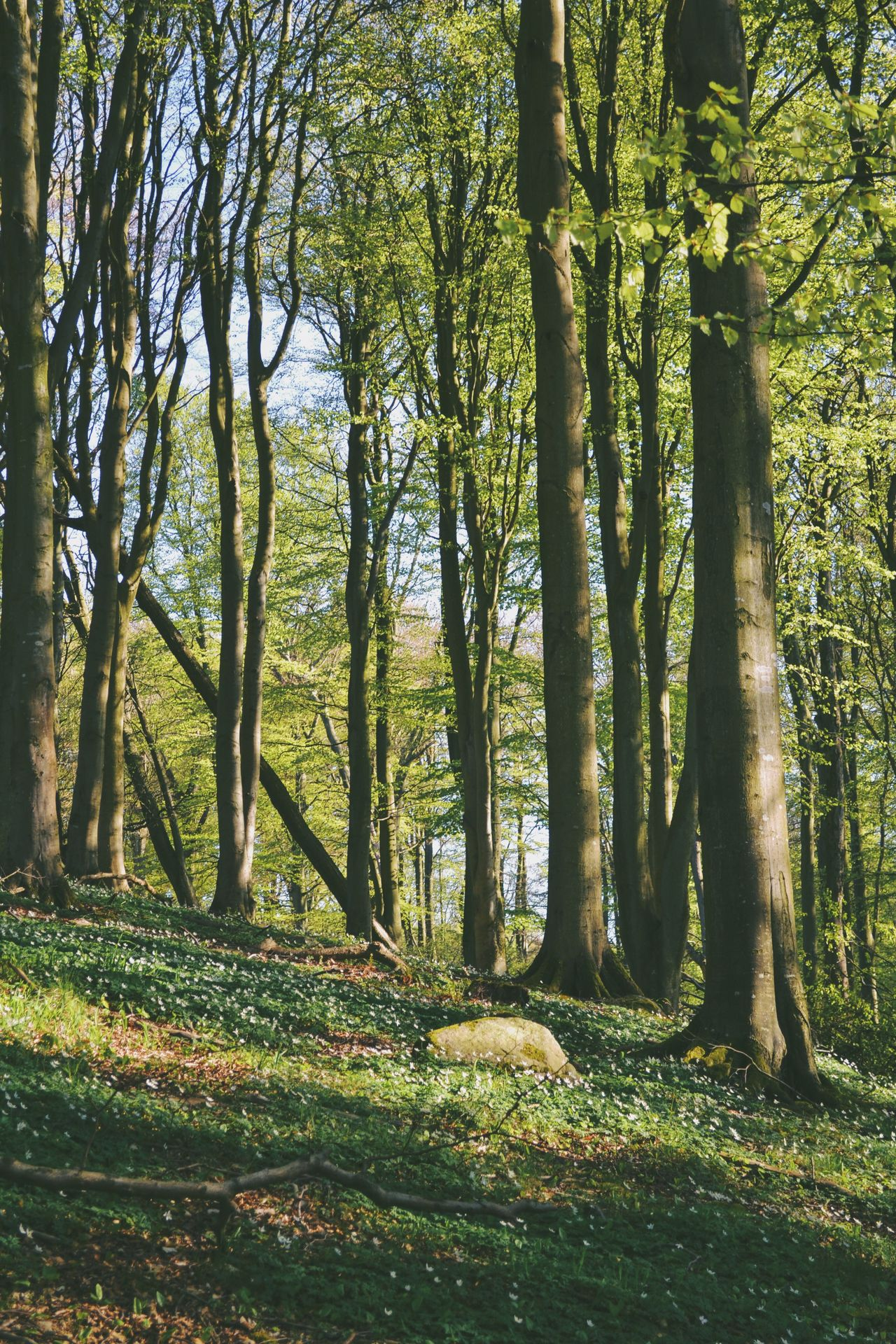 The Great Outdoors - 2016 EyeEm Awards Forest Tree Trees Landscape Nature Spring WoodLand