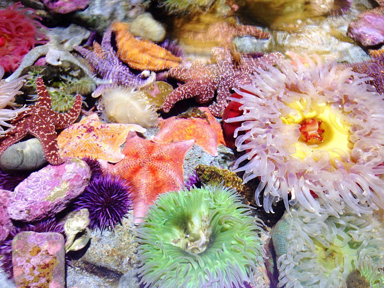 Live Corals Coral By Motorola EyeEm Best Shots EyeEm Nature Lover Nature