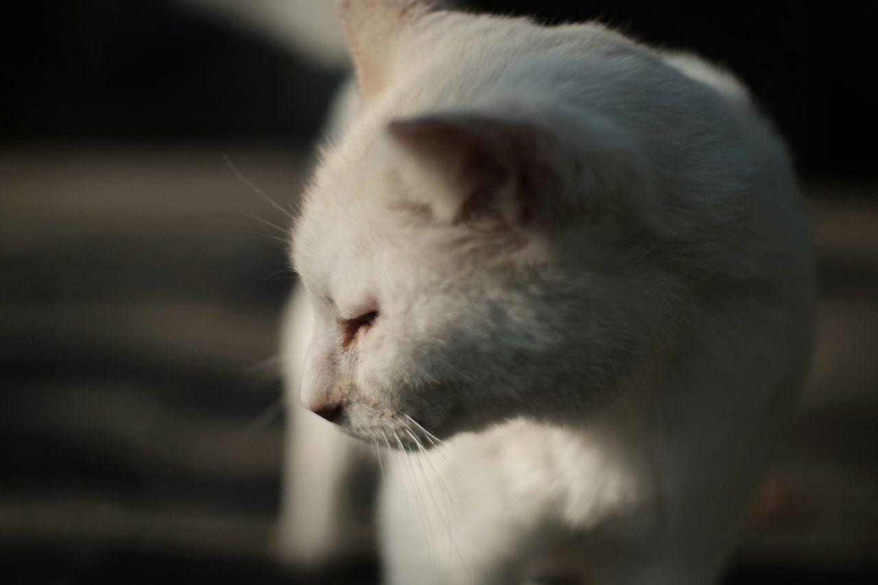 My wild lover Vintage Lenses Pancolar 50mm F2 Carl Zeiss Jena Fuji X-T1 FUJIFILM X-T1 Cat♡ Cats Cat Streetcat Street Cats