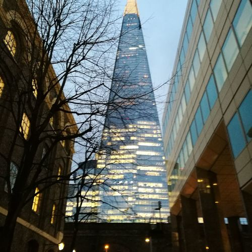 Shard London Bridge Architecture Low Angle View City Built Structure Building Exterior No People Tree Skyscraper Bare Tree Sky Outdoors Day