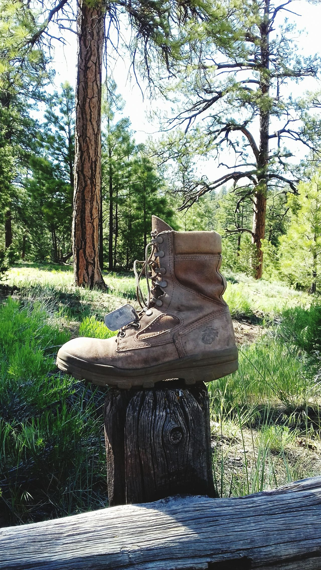 Memorial day 2017 Tree Day No People Nature Growth Outdoors Wood - Material Shadow Sunlight Grass Sky Marine Corps Dogtag Veteran Marine Boot