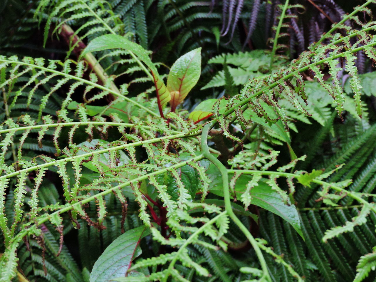 Backgrounds Beauty In Nature Close-up Day Fern Fragility Freshness Full Frame Green Color Growth Leaf Nature No People Outdoors Plant