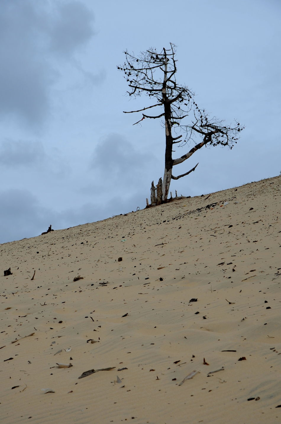 Animal Themes Arid Climate Beauty In Nature Day Dune Du Pyla Dune Of Pilat Landscape Nature No People Outdoors Sand Sand Dune Scenics Sky Tranquil Scene Tranquility Tree