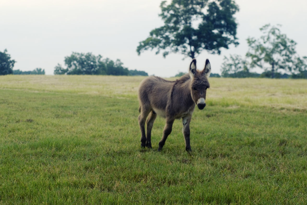 Beautiful stock photos of donkey, Animal Themes, Beauty In Nature, Day, Domestic Animals