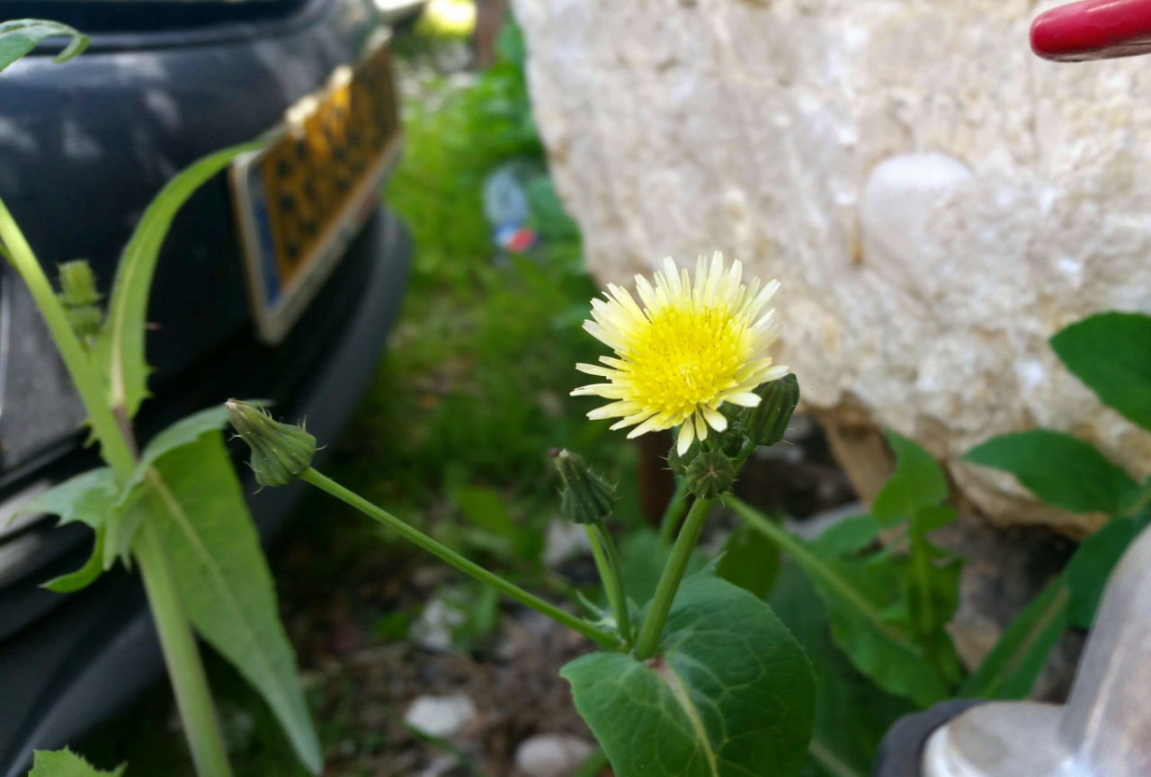 flower, plant, growth, no people, leaf, nature, outdoors, day, beauty in nature, fragility, freshness, close-up, green color, flower head