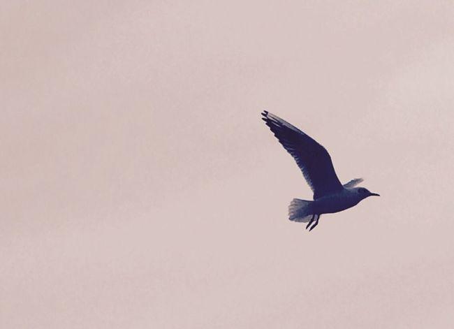 Mittagspause an der Nordsee Nature EyeEm Nature Lover Birds Animals