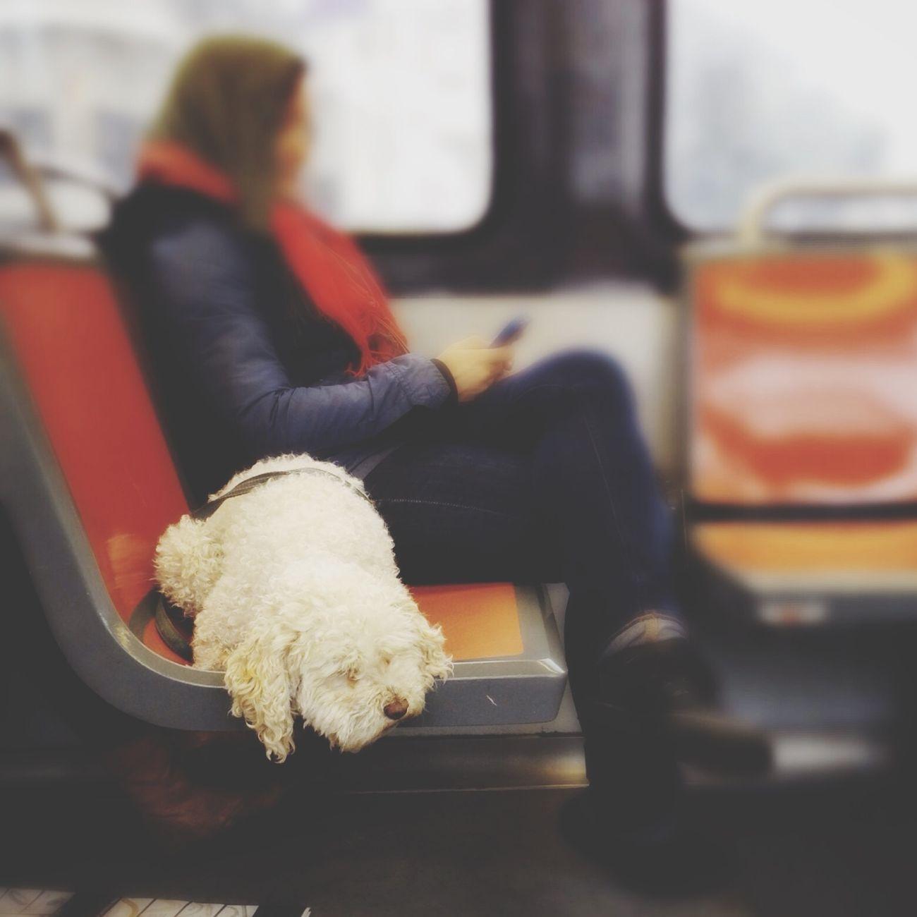 Tiltshift Dog MUNI Dog On Muni