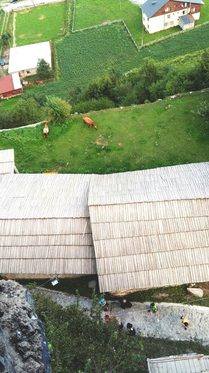 day, high angle view, built structure, green color, architecture, outdoors, no people, nature, animal themes, building exterior, tree, grass, water, mammal, bird