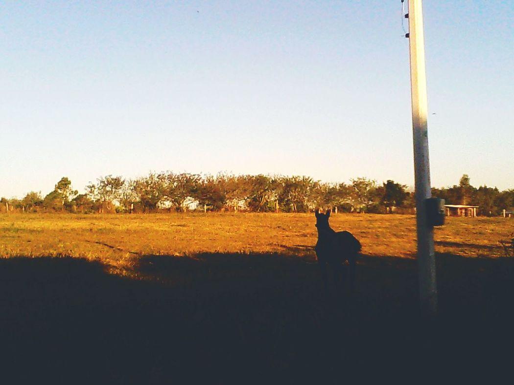 Alem do horizonte existe um lugar ... Horse Natureza 🐦🌳 Liberdade Fotografia Fotografandoporai