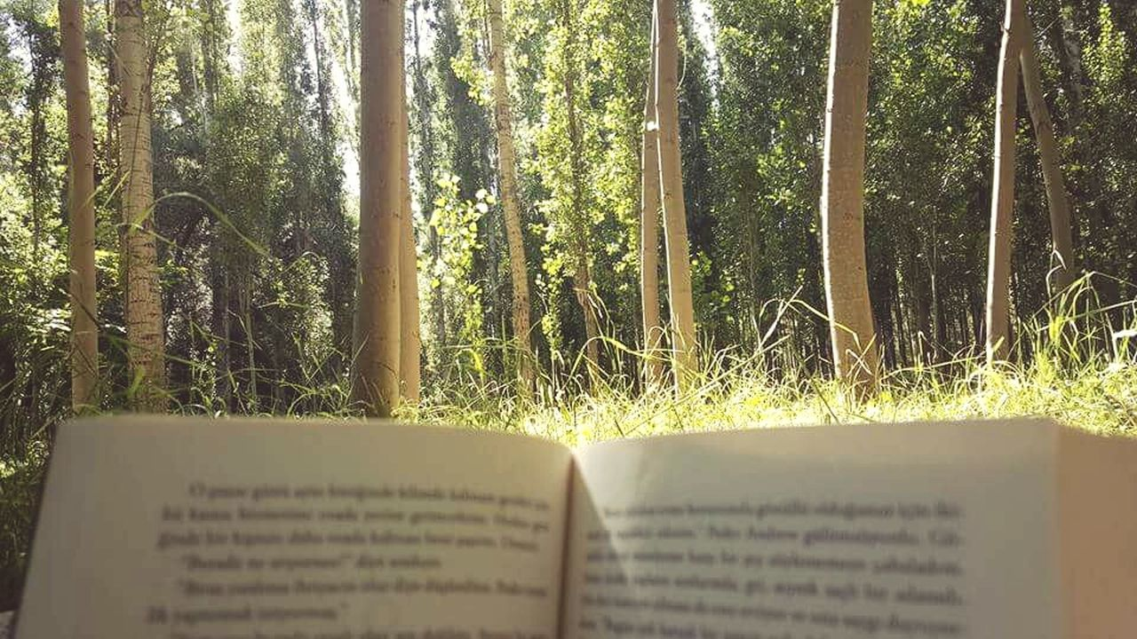 A reader lives a thousand lives before he dies. The man who never reads, lives only one. Booklover Books To Read Reading Joy Of Life Nature Tree Close-up Day Outdoors Capture The Moment Bookstagram