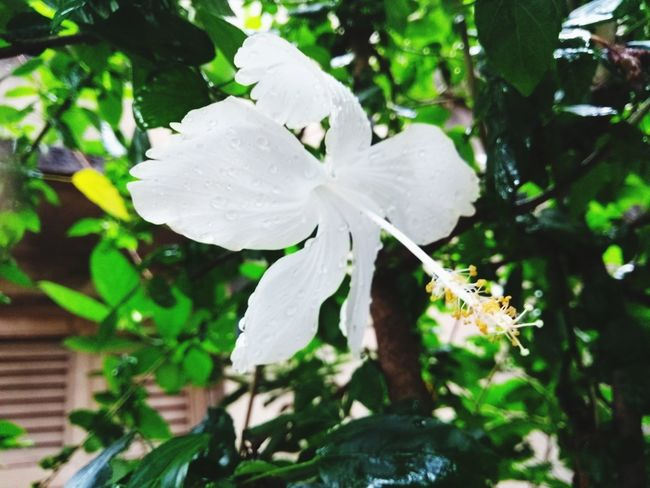 White Color Day Nature Flower Close-up No People Leaf Plant Outdoors Fragility Freshness Beauty In Nature Flower Head Let's Go. Together.
