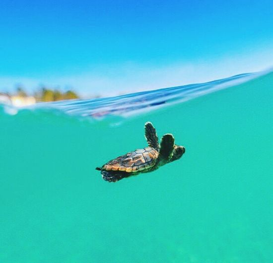 Tortuga Marina Happyday Beautiful Nature Oceanlife Relaxing Hello World Traveling