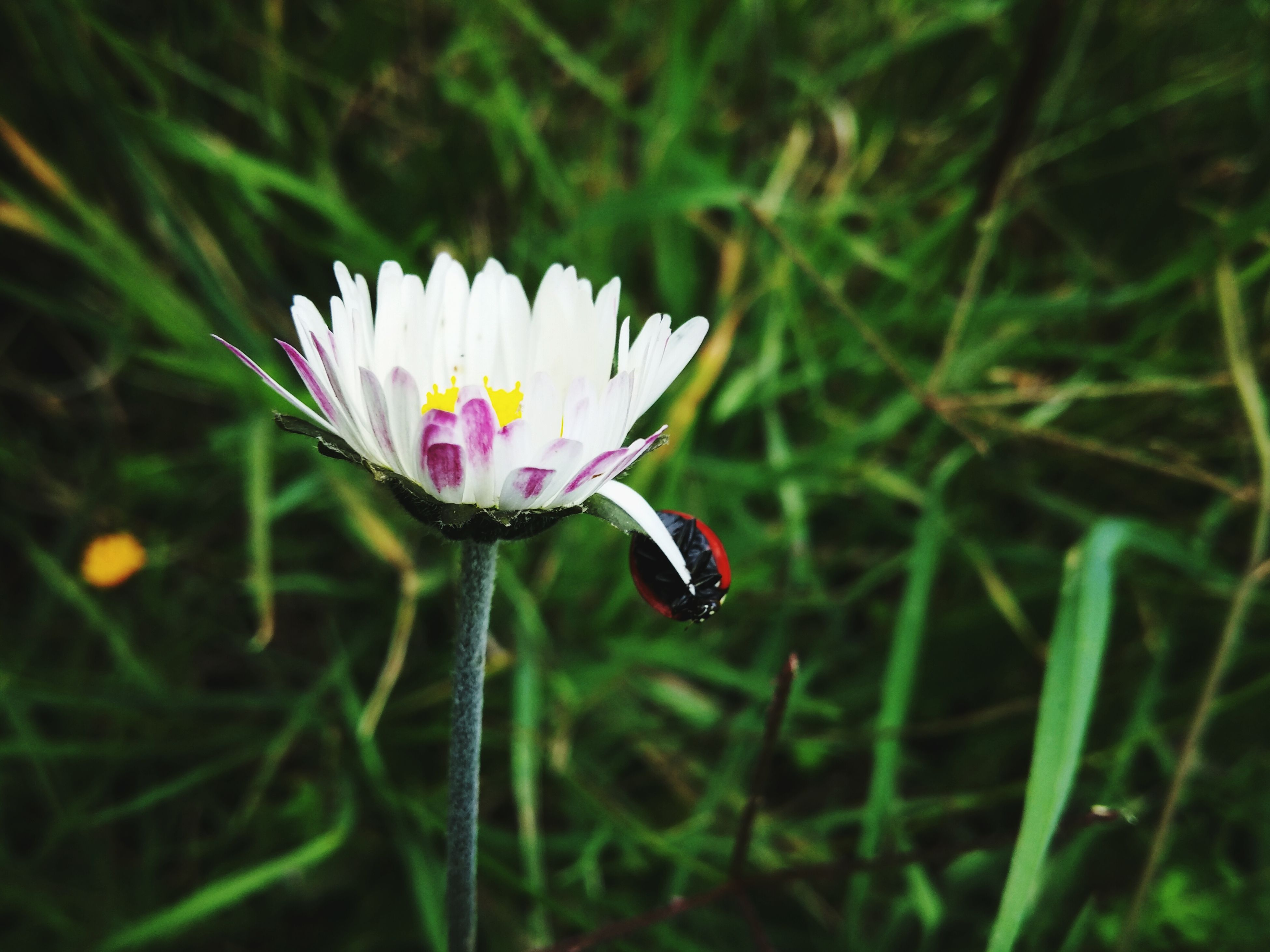 flower, fragility, growth, beauty in nature, nature, freshness, petal, flower head, plant, blooming, focus on foreground, green color, close-up, day, outdoors, pollen, no people