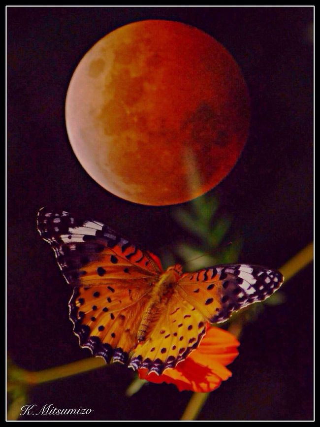 Total lunar eclipse and butterfly 蝶と皆既月食 Moon Butterfly Tadaa Community 勝蝶 蝶
