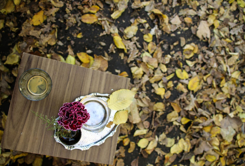 Autumn Coffee Coffee Time Espresso Espressoshot EyeEm Nature Lover Fall Beauty Fall Colors Happiness Herbst Pupparazzi Coffee Break Enjoying Life Fall Fall Leaves Feinfrankfurt Flower Flower Head Kaffee Leaves Outside Perspectives On Nature