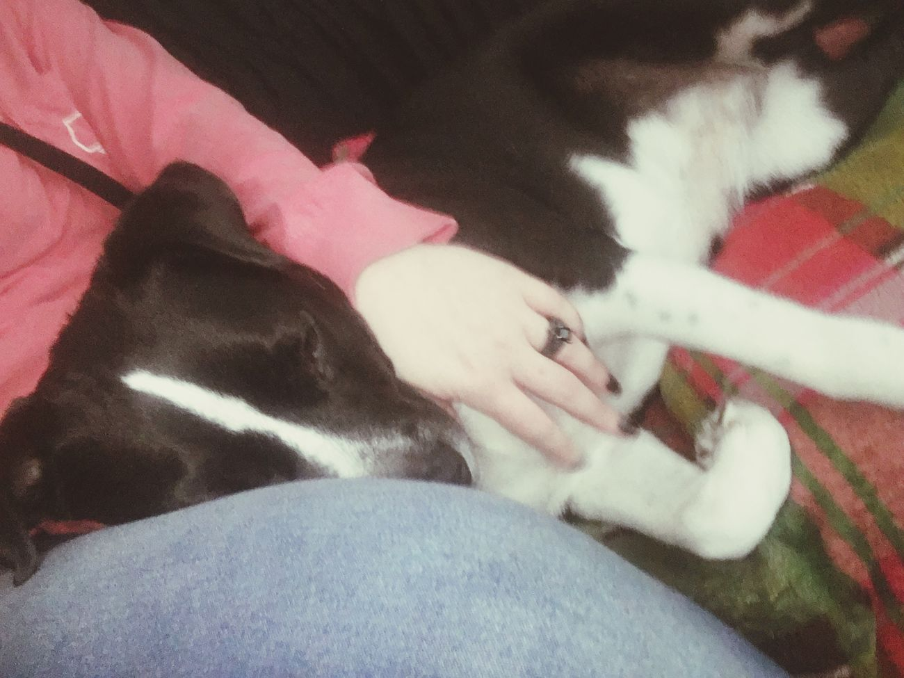 Snugglebuddy Pitbulls Dogslife Lazy Day Eyem Pets