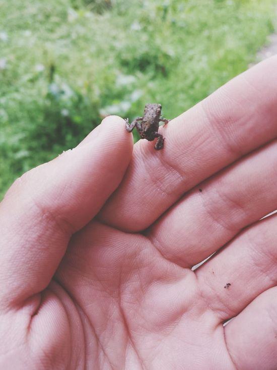 Tiny frog! Frog Nature Lakedistrict