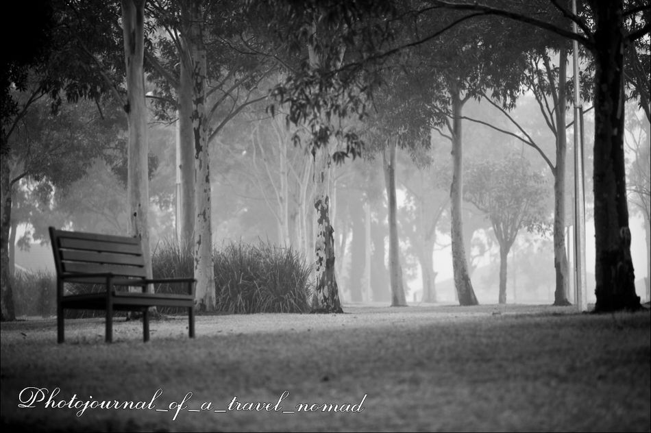 The early morning encounters with nature ... Early Morning Walk... India_gram Eyeem Black And White Digital Nomad Itchyfeet EyeEm Gallery Morning Light Black And White Photography Travel Diaries Enjoying Life Wa_nderlust Backpacking Escapades Secret Garden Bnw_collection Love To Click Photos Travel Captures Nomadic Lifestyle Photographers_of_india Living The Moment The Purist (no Edit, No Filter) Eyeem4photography - Strobist Enchanting Photography Repost_india Living The Good Life Repost_india Exclusive Shot