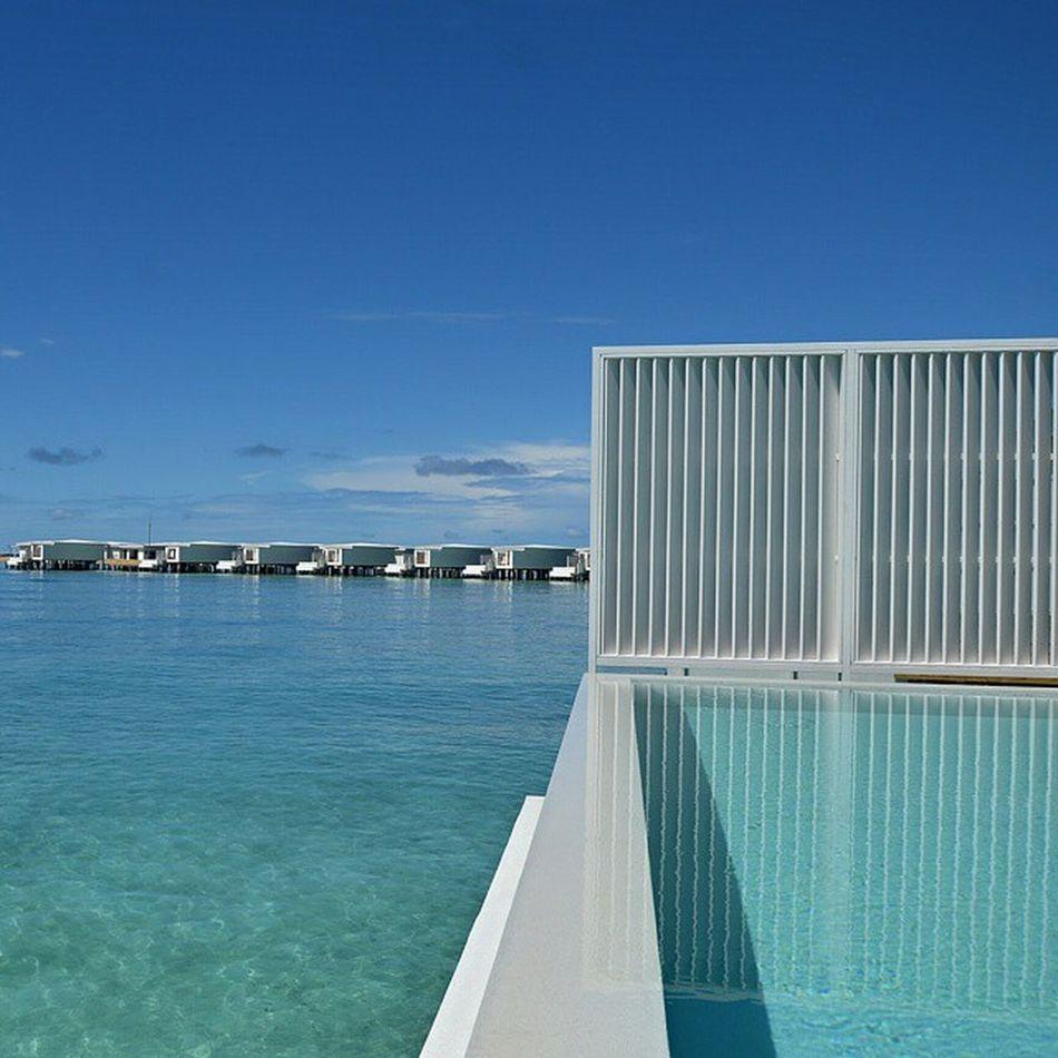 AMILLAFUSHI ━━━━━━━━━━━━━━━━━━ Maldives Luxuryworldtraveler LuxwtPrime Amilla Amillafushi Travel Lifestyle Holiday HotelsandResorts Bestvacations Vacation Instatravel Travelgram Tasteintravel Pool BeachZone • • • • • •