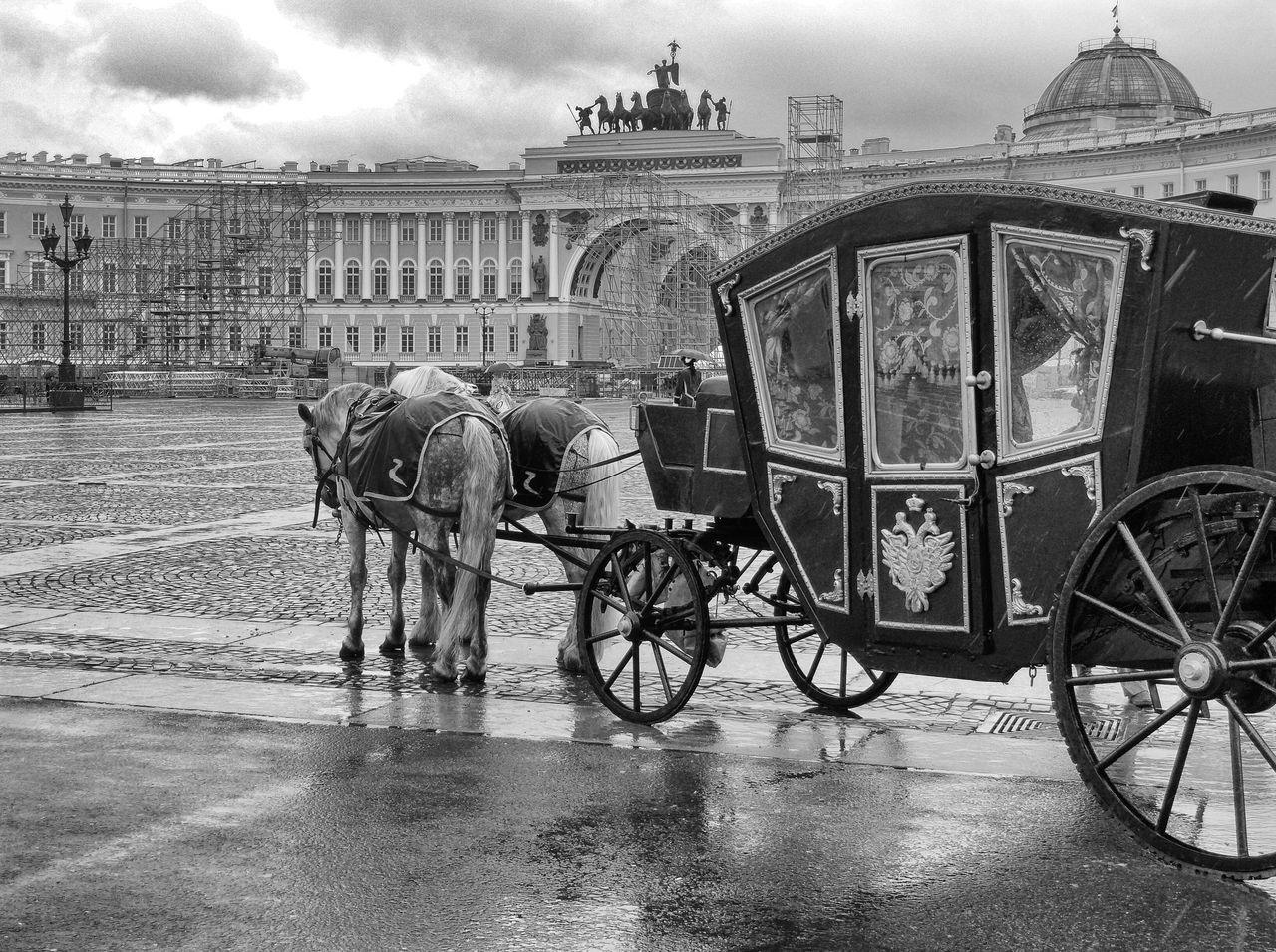 Carriage Cinderella Fairytale  Horse Horse Cart Outdoors Rainy Day Russia Saint Petersburg