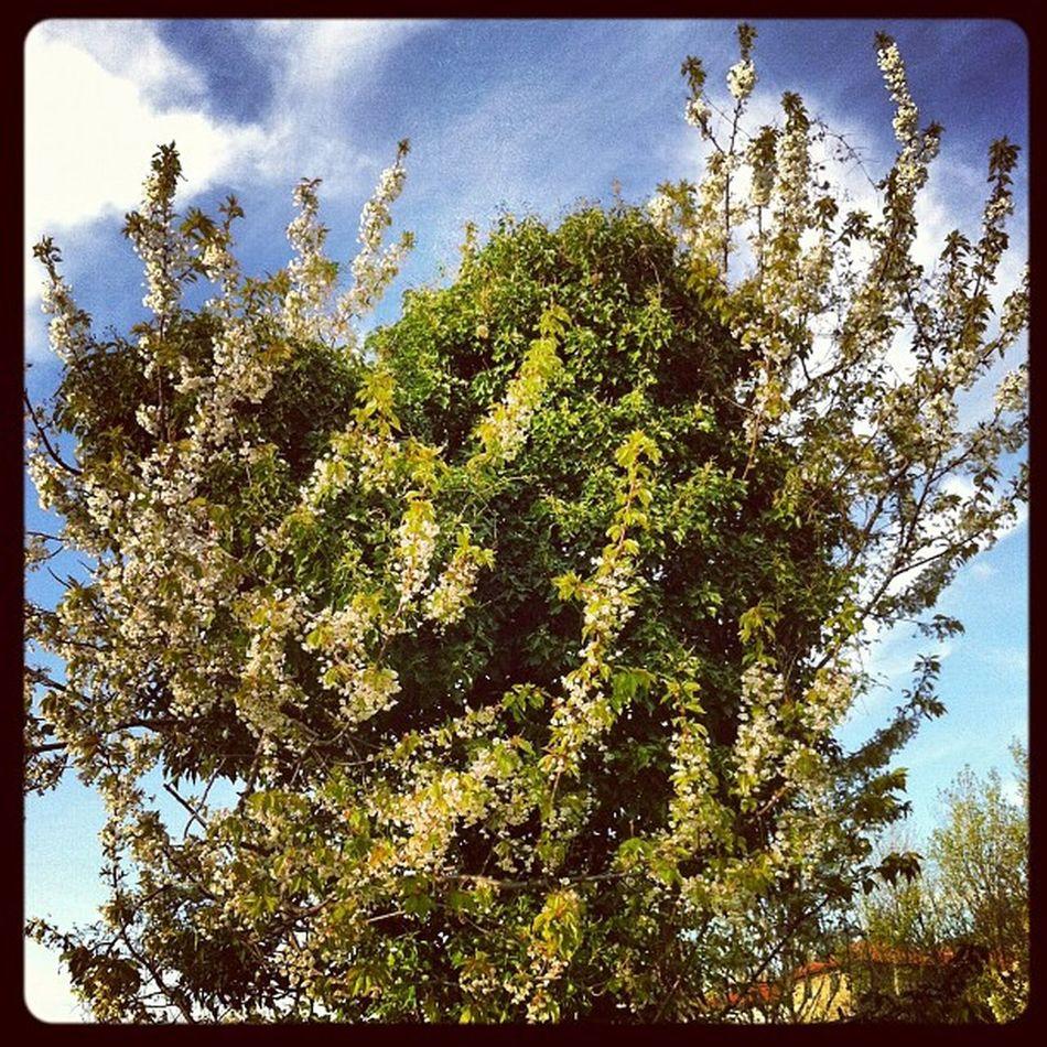 Battle Instaily Genova Iphonephoto Season  flowers trees spring