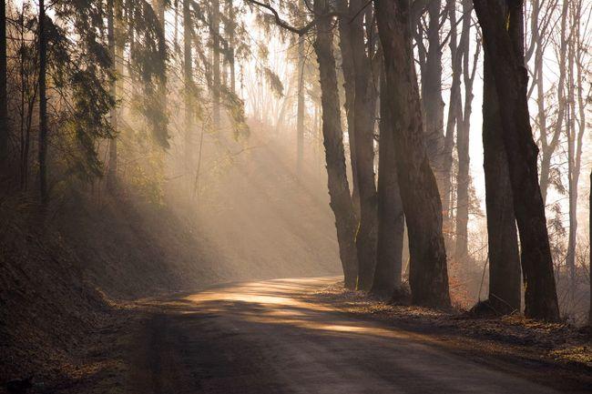 Hello World Eye4photography  EyeEm Nature Lover Nature Nature_collection Eyem Best Shots Tree Landscape Enjoying Life