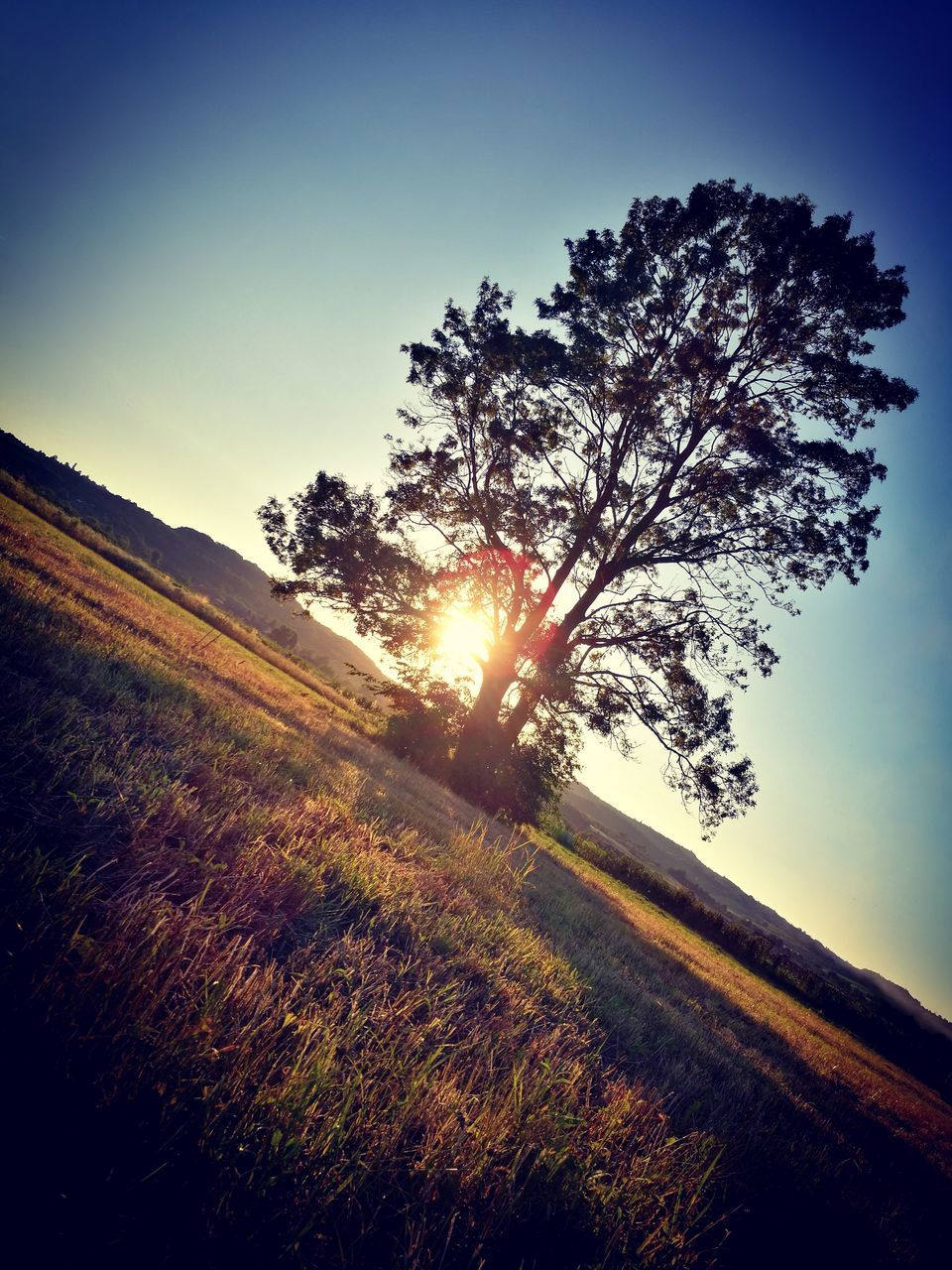 sun, sunbeam, nature, sunset, sunlight, lens flare, landscape, field, grass, tree, clear sky, tranquil scene, no people, beauty in nature, scenics, sunshine, growth, tranquility, outdoors, summer, sky, day