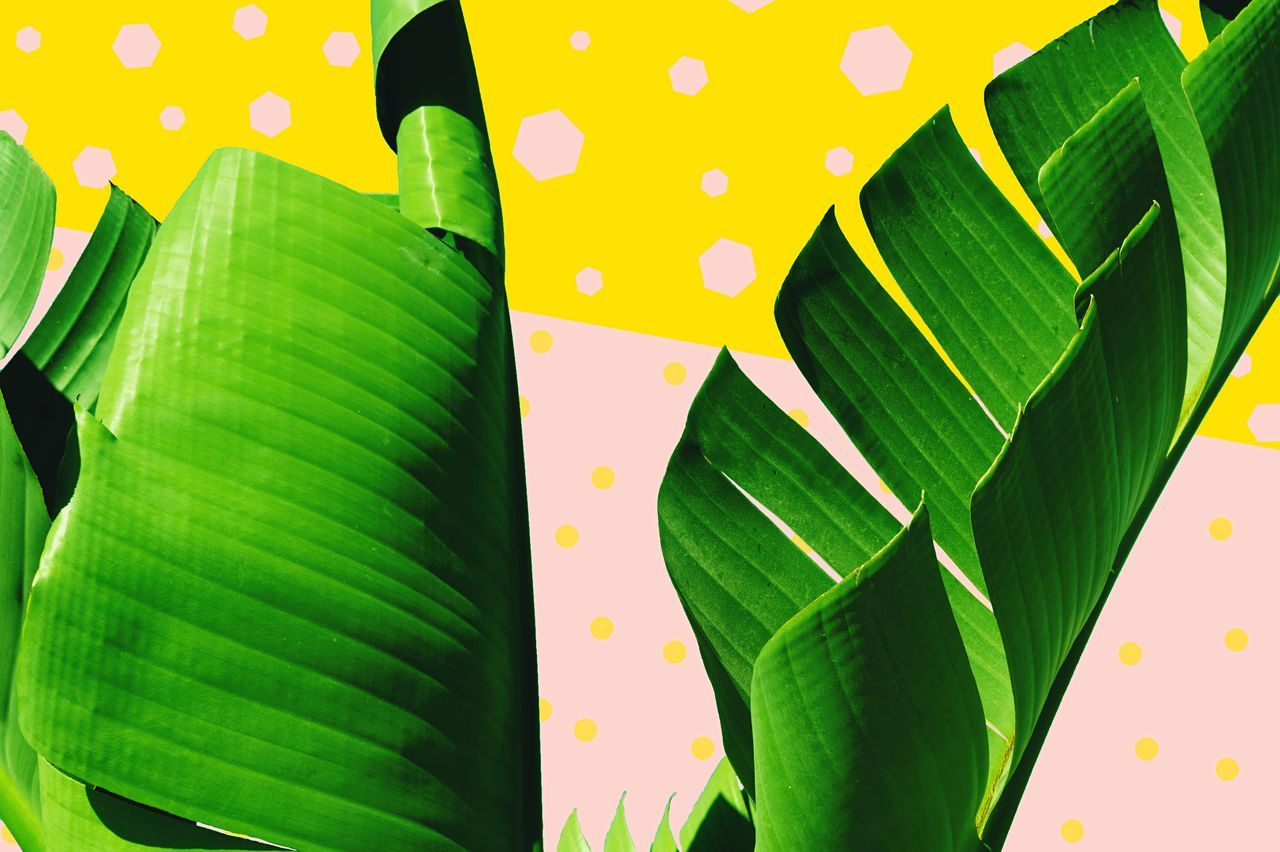 The Rolled Leaves Green Color Leaf Pattern Growth Nature Close-up Abstract Multi Colored Plant Yellow Freshness Beauty In Nature Minimalism First Eyeem Photo FirstEyeEmPic Pink Geometric Shapes Color Collage Pantone 2017 Abstractions In Colors Leaves Simplicity Leafs Rolled First Eyeem Photo