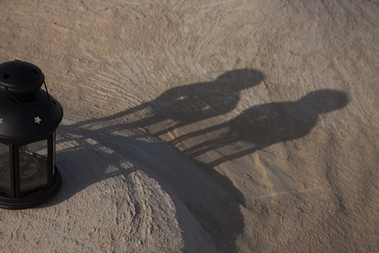 Animal Themes Close-up Day Focus On Shadow High Angle View Mammal Nature No People Outdoors Sand Shadow Sunlight